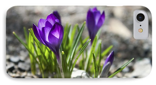 IPhone Case featuring the photograph Blooming Crocus #1 by Jeff Severson