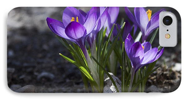IPhone Case featuring the photograph Blooming Crocus #2 by Jeff Severson
