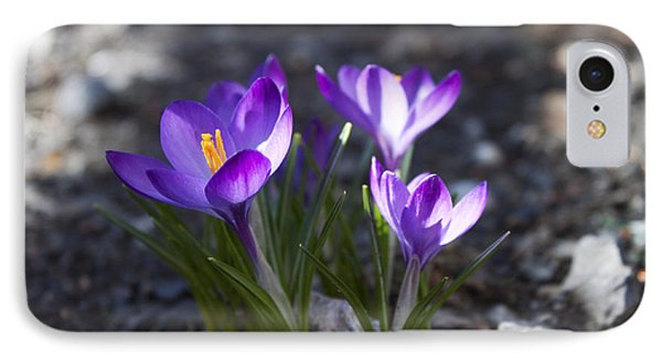 IPhone Case featuring the photograph Blooming Crocus #3 by Jeff Severson