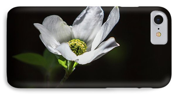 Blooming Dogwoods In Yosemite 3 IPhone Case