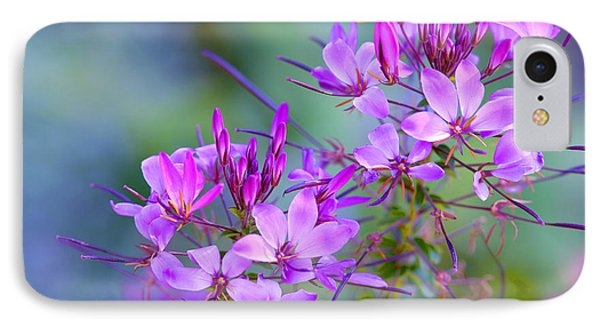 IPhone Case featuring the photograph Blooming Phlox by Alana Ranney