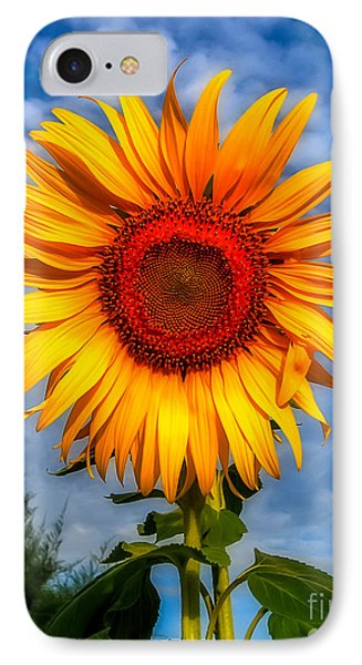 Blooming Sunflower  IPhone Case by Adrian Evans