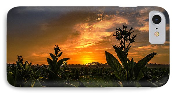 Blooming Tobacco IPhone Case