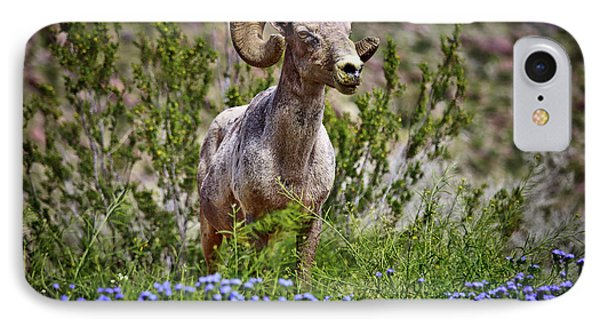 Blooms And Bighorn In Anza Borrego Desert State Park  IPhone Case by Sam Antonio Photography