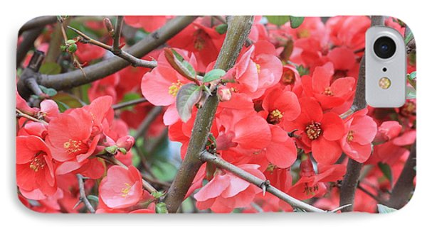 Blossoms Branches And Thorns Phone Case by Carol Groenen