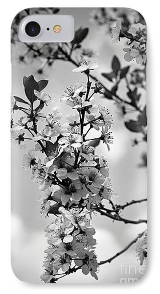 Blossoms In Black And White IPhone Case by Sue Stefanowicz
