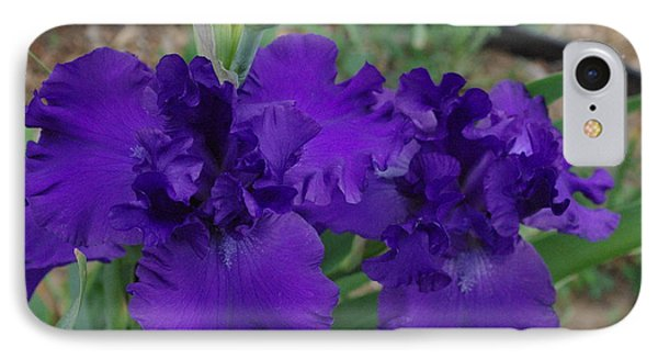 Blue Bearded Irises IPhone Case by Robyn Stacey