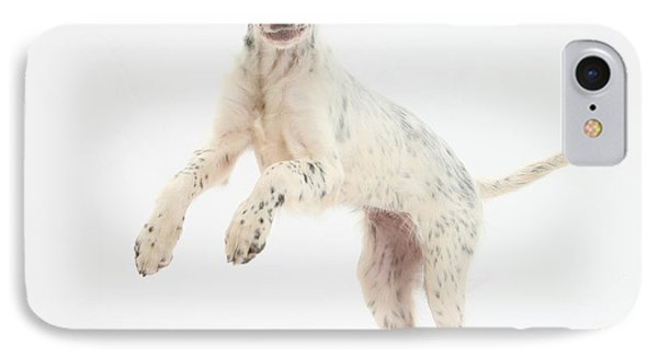 Blue Belton English Setter IPhone Case by Mark Taylor