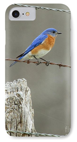 Blue Bird On Barbed Wire Phone Case by Robert Frederick