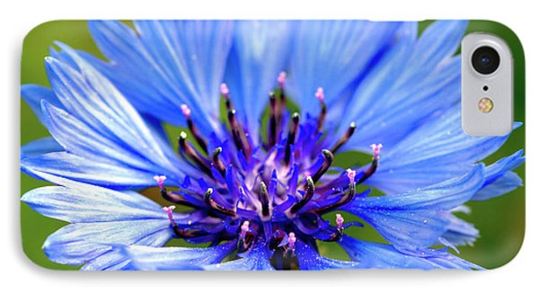 Blue Cornflower IPhone Case