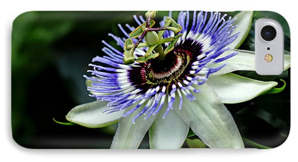 Blue Crown Passion Flower IPhone Case by Debbie Oppermann