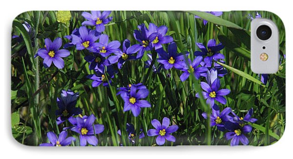 Blue Eyed Grass IPhone Case