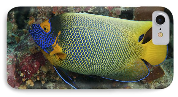 Blue Face Angelfish Phone Case by Steve Rosenberg - Printscapes