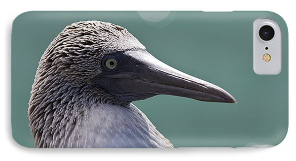 Blue Footed Booby II IPhone Case by Dave Fleetham