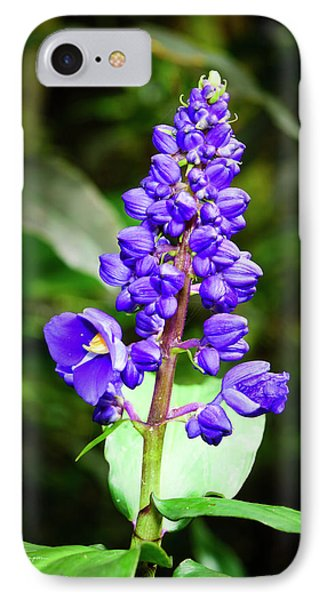 Blue Ginger IPhone Case by Jim Thompson