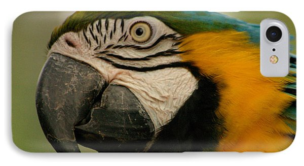 Blue Gold Macaw South America IPhone Case by Ralph A  Ledergerber-Photography