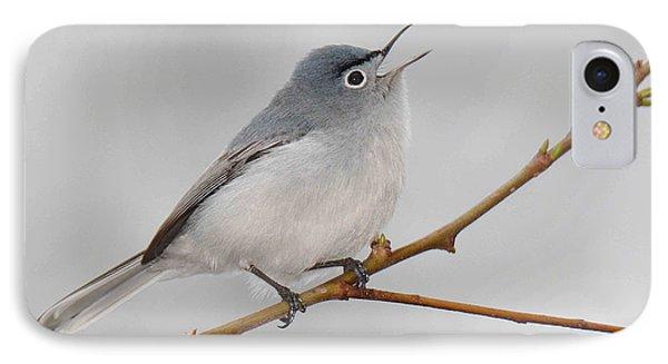 Blue-gray Gnatcatcher IPhone Case by Alan Lenk