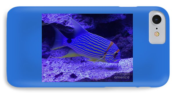 Blue Fish Groupie IPhone Case by Richard W Linford