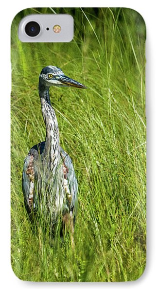 IPhone Case featuring the photograph Blue Heron In A Marsh by Paul Freidlund