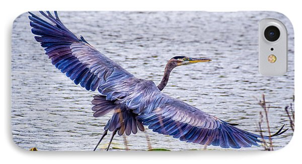 Blue Heron  Take Off  IPhone Case by Peggy Franz