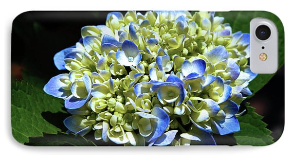 Blue Hydrangea Onstage 2620 H_2 IPhone Case