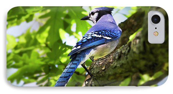 Blue Jay Phone Case by Christina Rollo