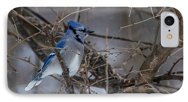 IPhone Case featuring the photograph Blue Jay by Dan Traun