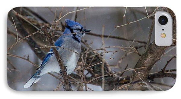 Blue Jay IPhone Case by Dan Traun