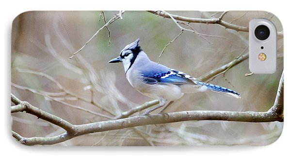 IPhone Case featuring the photograph Blue Jay by George Randy Bass