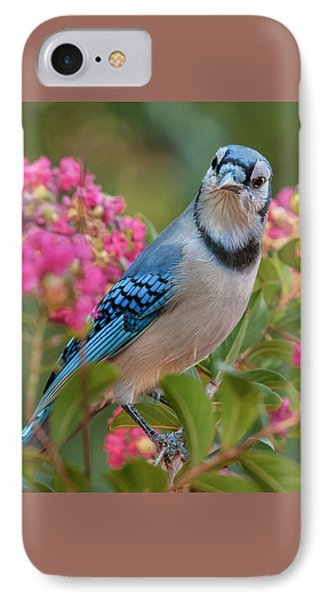 Blue Jay In Crepe Myrtle IPhone Case by Jim Moore