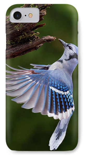 IPhone Case featuring the photograph Blue Jay In Flight by Mircea Costina Photography