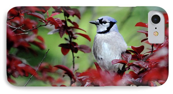 Blue Jay In The Plum Tree IPhone Case by Trina Ansel