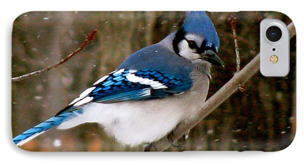 Blue Jay In The Snow IPhone Case by Debra     Vatalaro