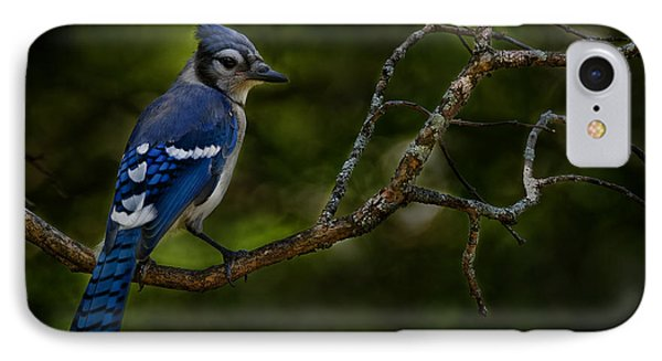 IPhone Case featuring the photograph Blue Jay In Tree by Michael Cummings