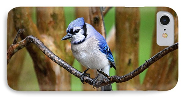 Blue Jay On A Branch IPhone Case by Trina Ansel