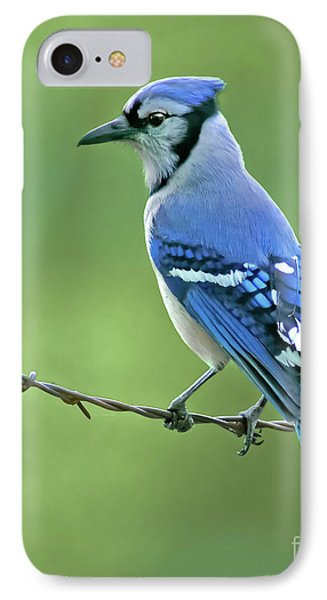 Bluejay iPhone 7 Case - Blue Jay On The Fence by Robert Frederick
