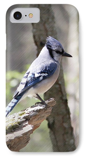 Blue Jay Perch IPhone Case