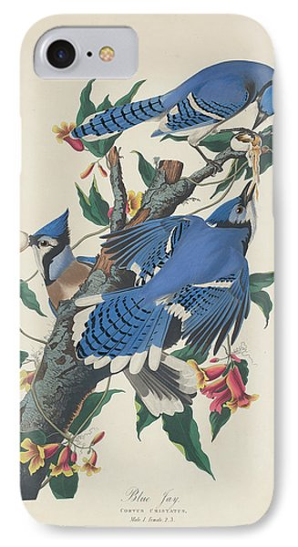 Blue Jay IPhone Case by Mountain Dreams