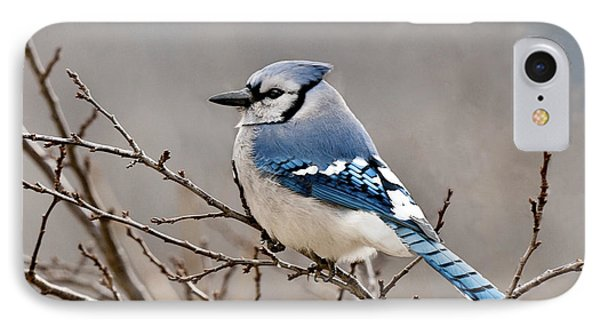 Blue Jay Way Phone Case by Lara Ellis