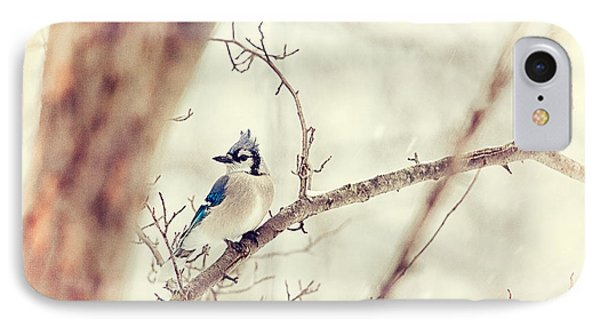Blue Jay Winter Phone Case by Karol Livote