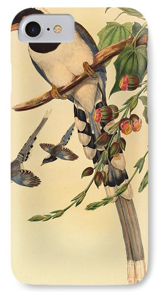 Magpies iPhone 7 Case - Blue Magpie, Urocissa Magnirostris by John Gould
