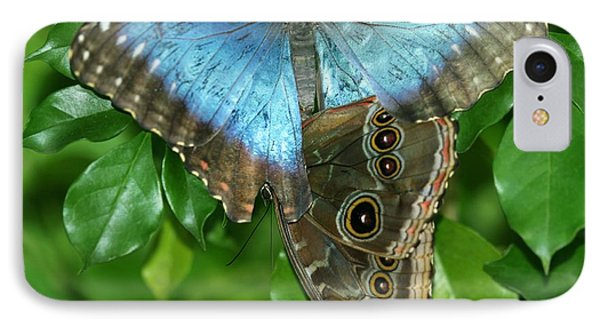 Blue Morpho Butterflies Phone Case by Sabrina L Ryan