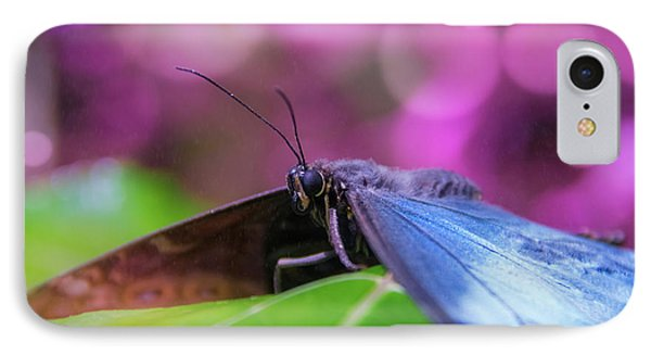 Blue Morpho  Butterfly 2 IPhone Case