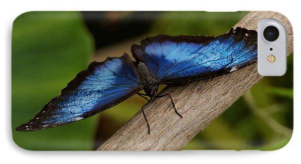 Blue Morpho Butterfly Phone Case by Sandy Keeton