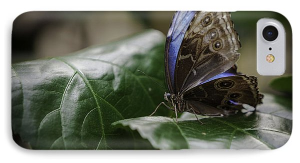IPhone Case featuring the photograph Blue Morpho On A Leaf by Jason Moynihan