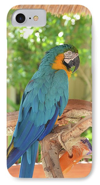 Blue Parrot With A Toy IPhone Case by Artful Imagery