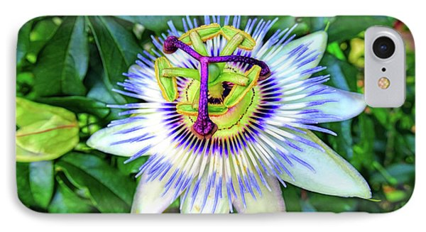 Blue Passion Flower IPhone Case by Sue Melvin