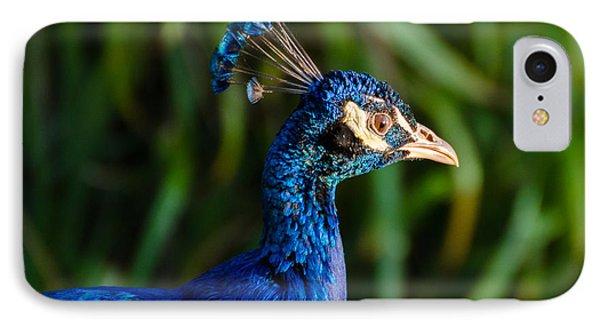 Blue Peacock IPhone Case by Daniel Precht