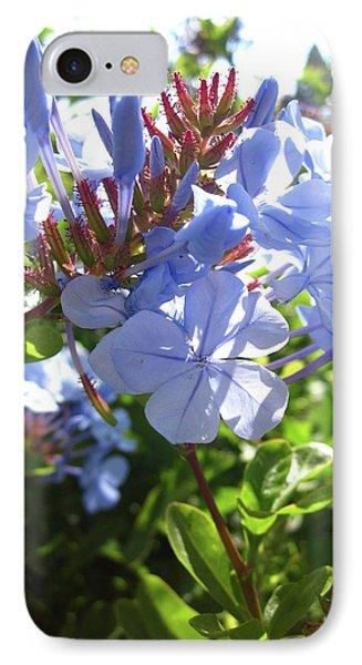 Blue Plumbago IPhone Case by Mary Ellen Frazee