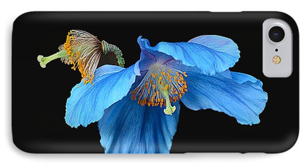 Blue Poppies IPhone Case by Cindy Manero